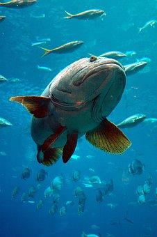 aquarium-1886582__340