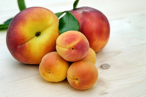 apricots-2527193__340