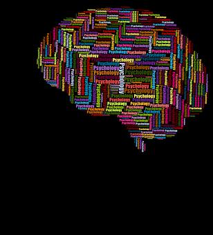 cranium-3350798__340
